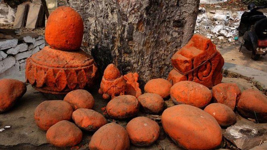 Đến Ấn Độ xem lễ hội cây
