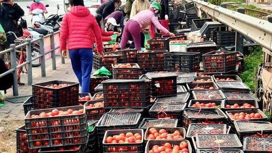 40.000 đồng/10kg cà chua 'giải cứu', mách chị em cách bảo quản cà chua được lâu và chế biến được nhiều món ăn hấp dẫn