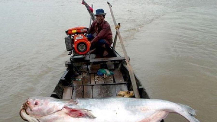Các quần thể cá nước ngọt toàn cầu có nguy cơ tuyệt chủng