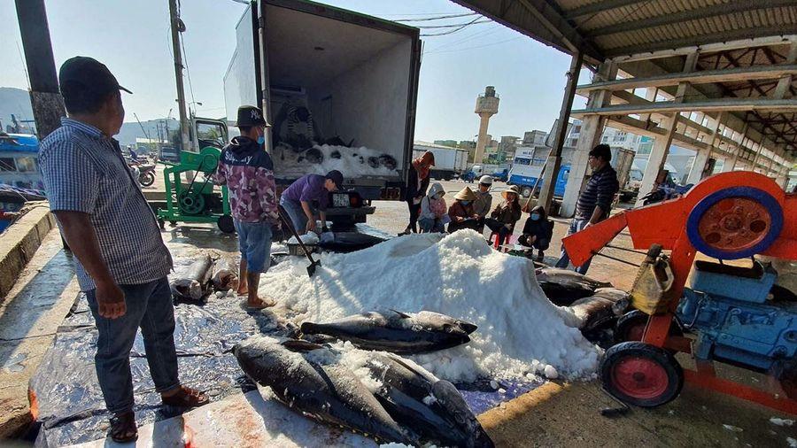 Chuyến biển xuyên Tết hiệu quả thấp, ngư dân Bình Định kém vui