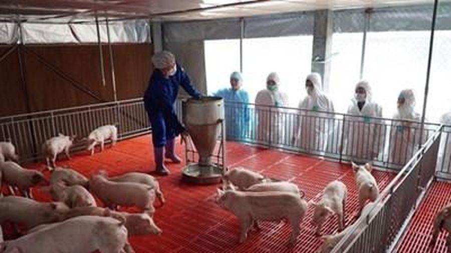 Đảm bảo an toàn dịch bệnh hướng tới mục tiêu tăng trưởng ngành hàng thịt lợn
