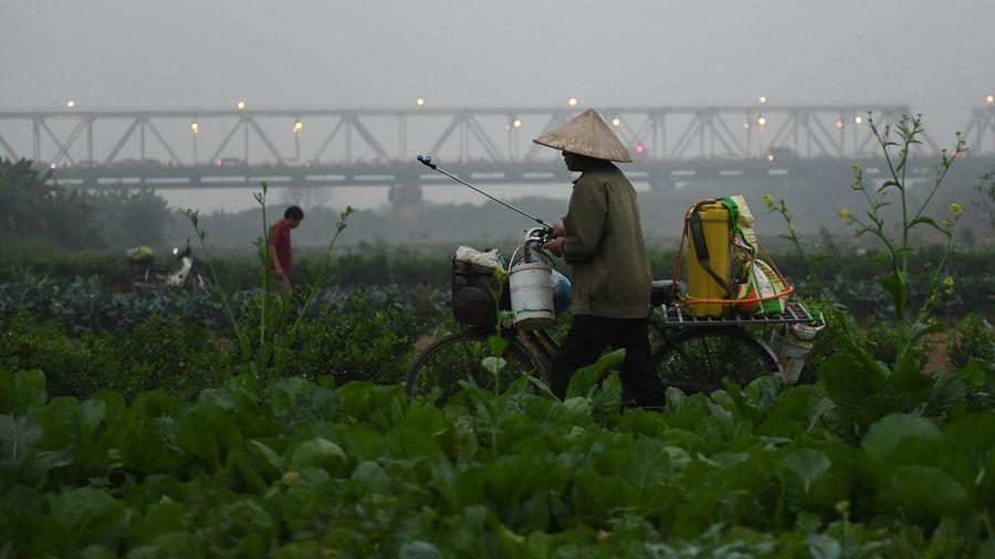 Quy hoạch phân khu sông Hồng thành đô thị trung tâm Hà Nội