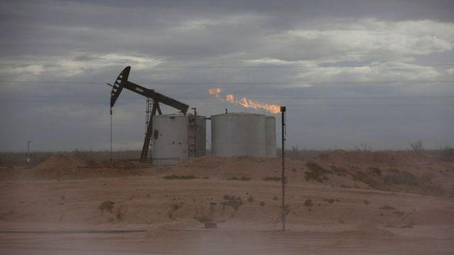 Giá dầu duy trì đà phục hồi mạnh, tăng hơn 20% trong tháng 2