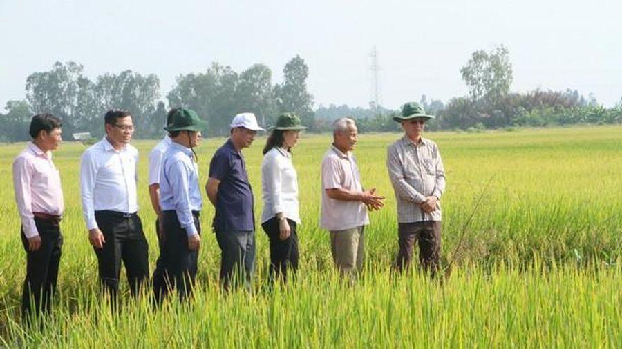 Chủ động ứng phó với hạn hán và xâm nhập mặn mùa khô 2021