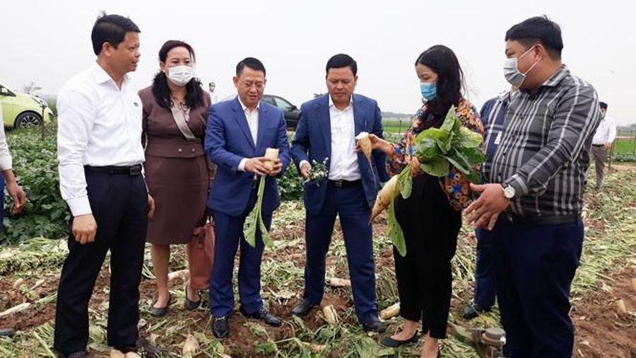 Hà Nội: Hỗ trợ những quận, huyện cần 'giải cứu' nông sản