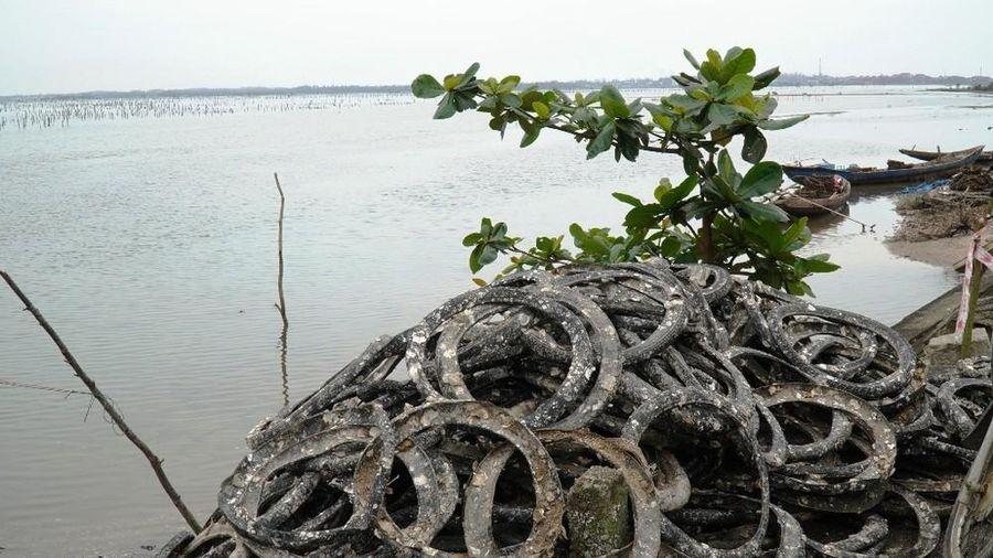 Công bố nghiên cứu khoa học nghề nuôi hàu lạ lùng 'đầu độc' đầm nước danh thắng Lăng Cô