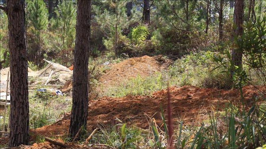 Xử phạt đối tượng lấn chiếm đất rừng phòng hộ ở Lâm Đồng