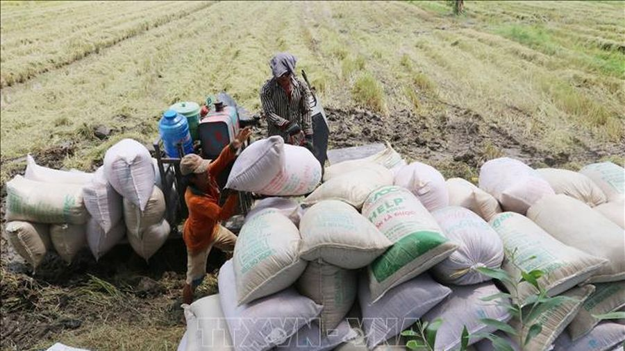Thị trường nông sản trong nước tuần qua: Giá cà phê, tiêu tăng mạnh