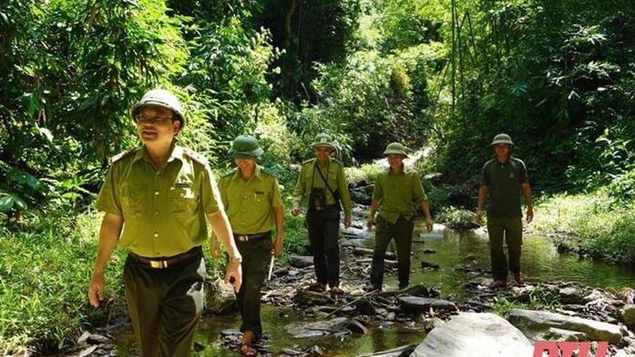 Bảo vệ rừng ở Khu Bảo tồn thiên nhiên Pù Hu