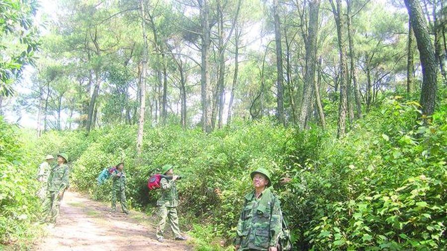 Chủ động bảo vệ rừng thông trong mùa khô hanh