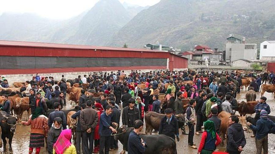 Phiên chợ bò ở cao nguyên đá