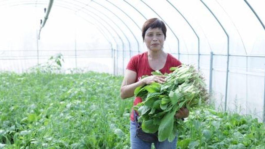 Cơ cấu lại ngành nông nghiệp theo hướng phát triển bền vững