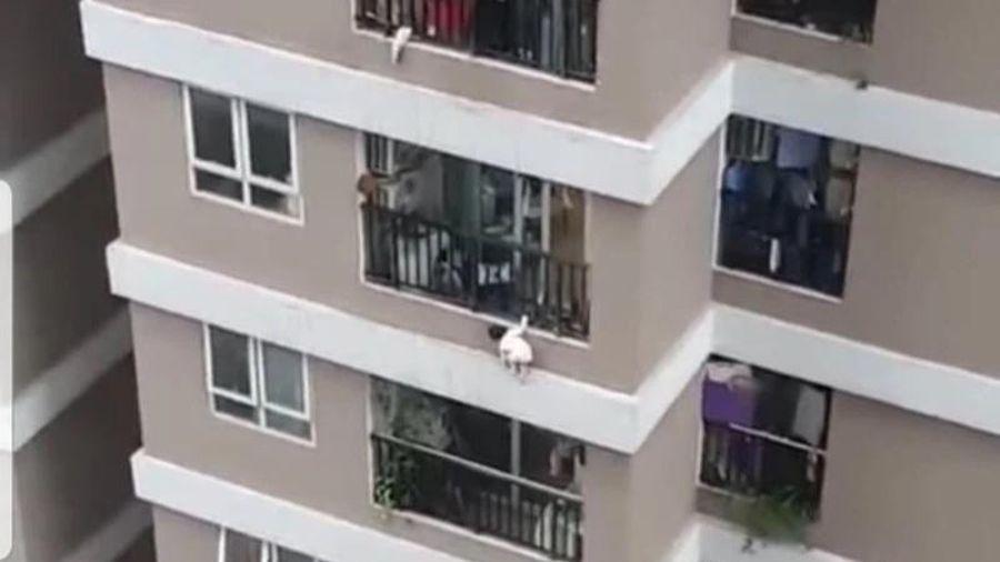Cứu sống cháu bé 2 tuổi rơi từ tầng 12