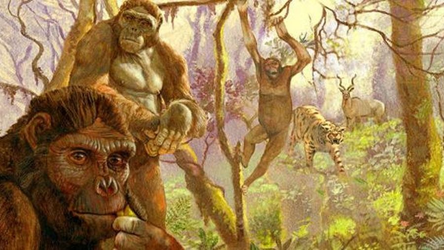 Sốc: loài 4,4 triệu tuổi biến đổi 'nhảy vọt' từ tinh tinh thành con người