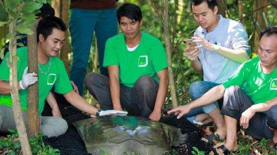 Tìm 'bạn đời' cho rùa Hoàn Kiếm