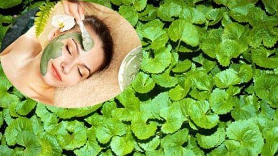 Cách làm mặt nạ trị mụn từ rau má hiệu quả hơn cả mỹ phẩm tiền triệu