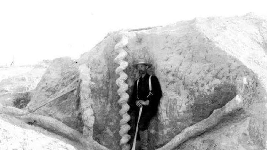 Ai là người đã làm ra 'cái vặn nút chai của quỷ' cao hơn hai mét này từ hàng triệu năm trước?