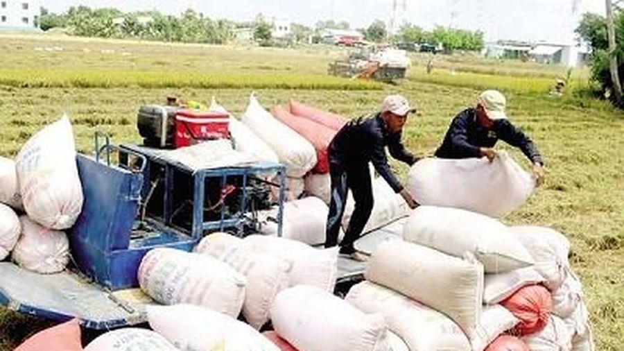 Giá gạo tiến sát Thái Lan: Chiến lược gạo Việt khôn ngoan?