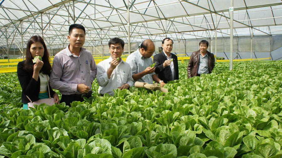 Cơ cấu theo 3 nhóm sản phẩm trong chuỗi giá trị nông sản toàn cầu