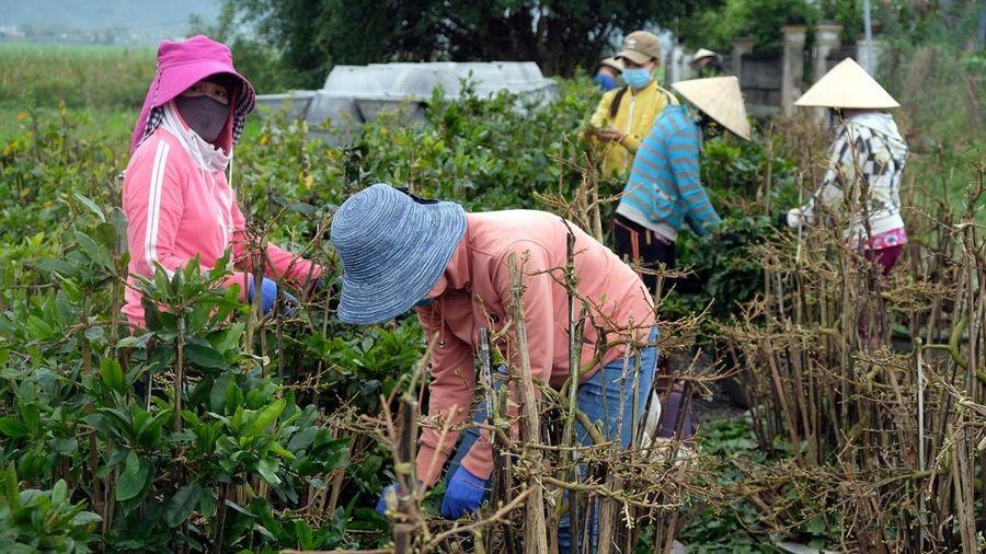 Để nông nghiệp Việt Nam thoát 'manh chiếu hẹp'