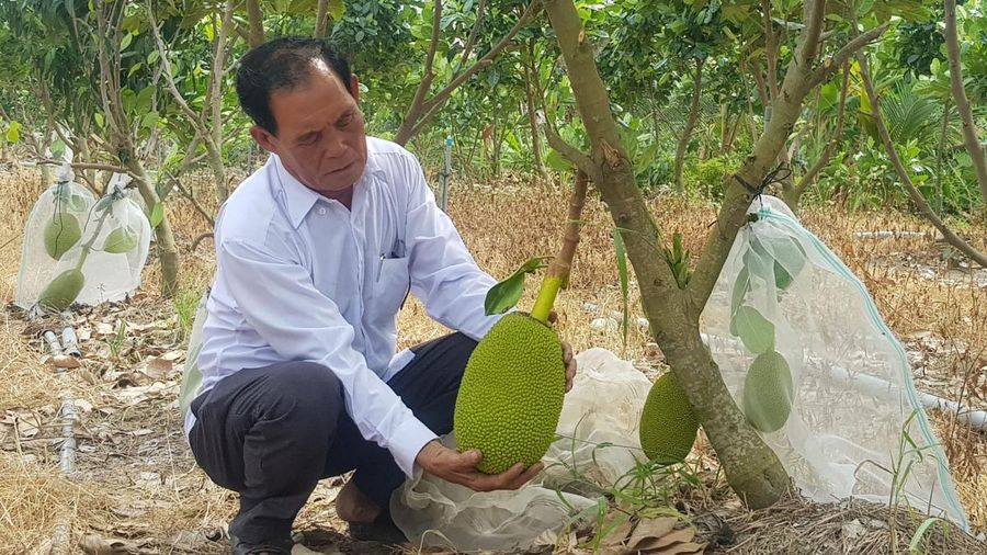 'Lão nông' ở Long An làm giàu từ cây lúa trên đất phèn
