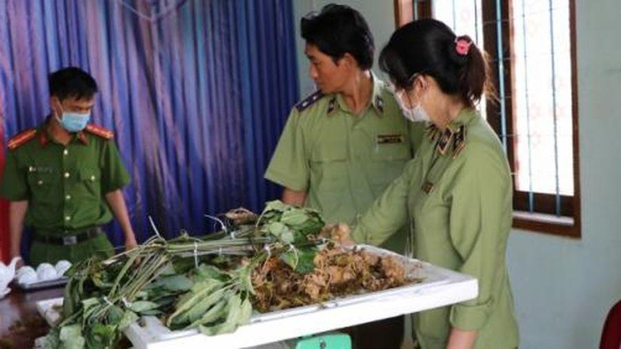 'Đội lốt' sâm Ngọc Linh đưa từ Bắc vào Kon Tum tiêu thụ