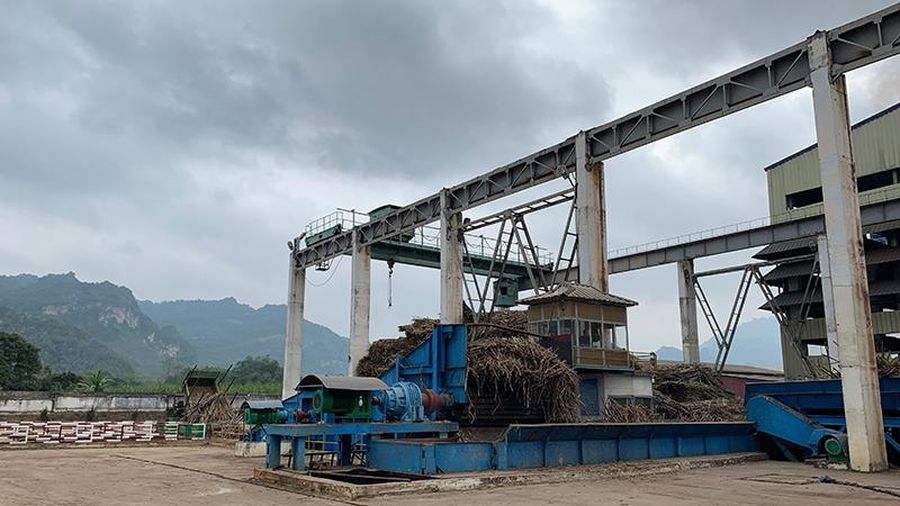 Xử lý tình trạng tranh mua nguyên liệu mía ở Tuyên Quang