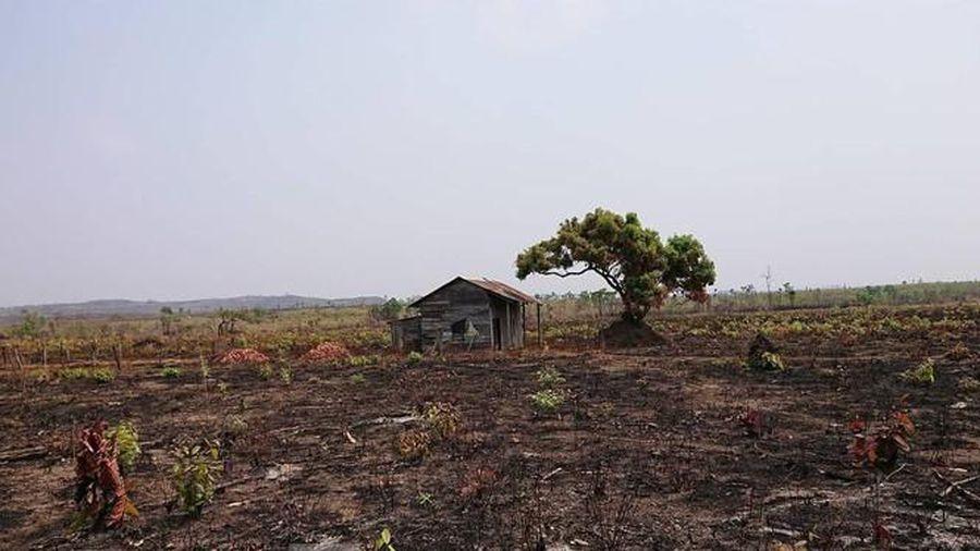 Hơn 22.000ha rừng ở Đắk Lắk bị xóa sổ ra sao?