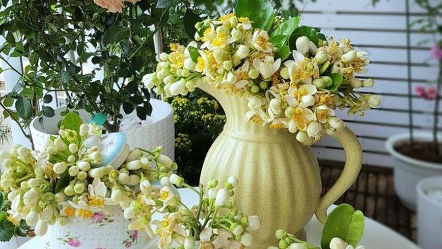 Cách bảo quản hoa bưởi tươi lâu hơn 3-4 ngày