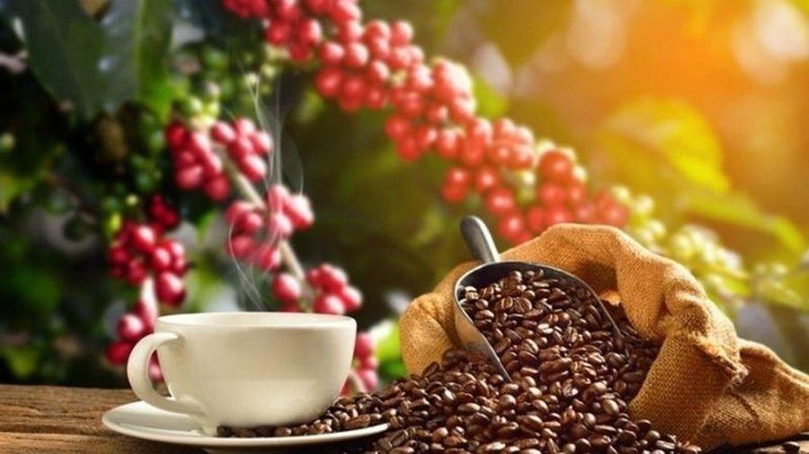 Giá cà phê trong nước tiếp tục tăng, cà phê thế giới đi xuống