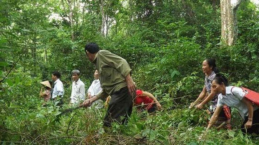 Nghệ An đề nghị cấp hơn 11 tấn gạo hỗ trợ hộ nghèo chăm sóc, bảo vệ rừng