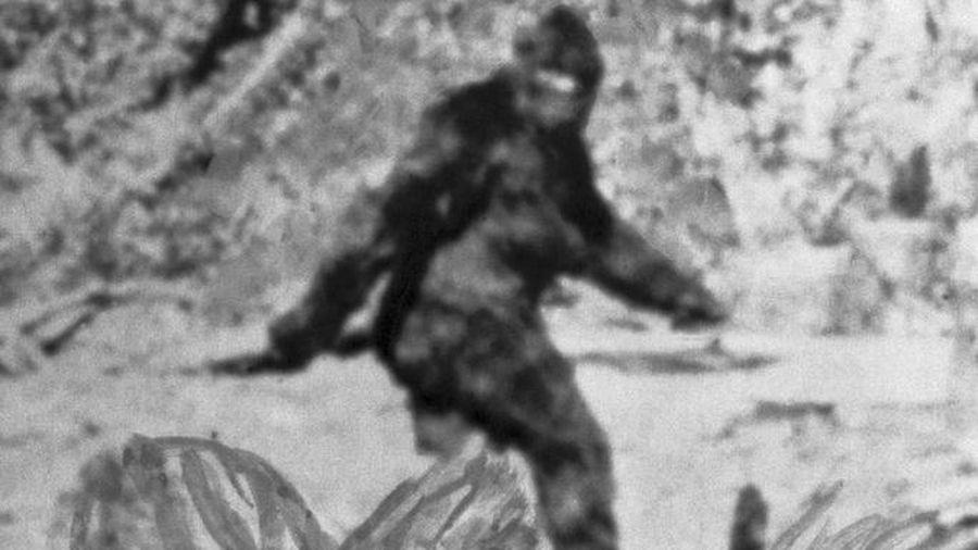 DNA tiết lộ sự thật về 'người tuyết' Yeti
