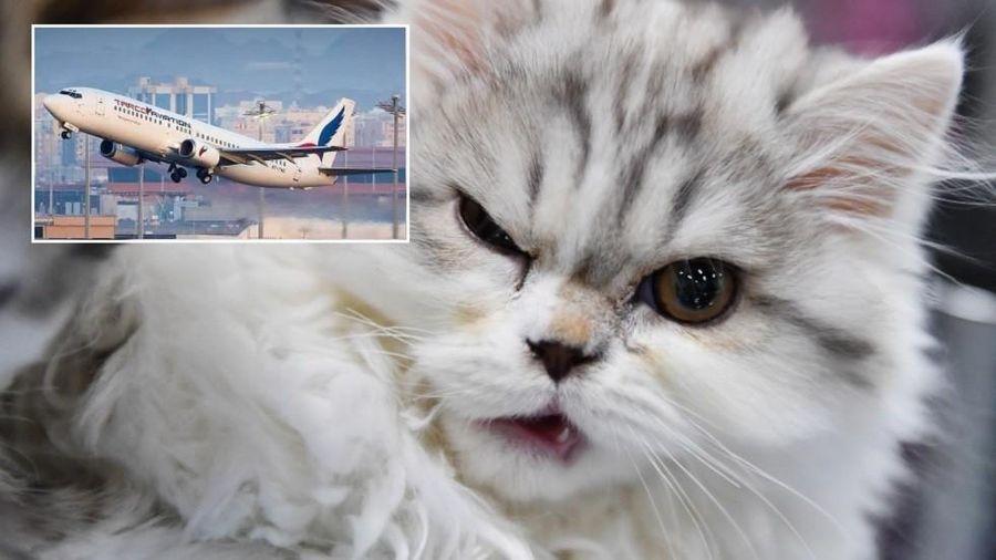 Máy bay hạ cánh khẩn cấp vì bị 'khủng bố' bởi…mèo