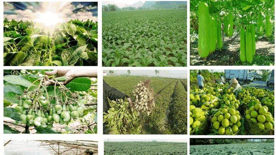 Sẽ có đối tượng ưu tiên được thụ hưởng chính sách chuyển đổi cây trồng