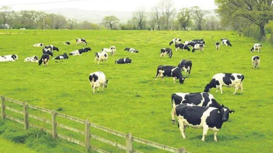Vilico lên phương án sáp nhập GTNFoods, tham cọng đầu tư 1.700 tỷ làm trang trại bò