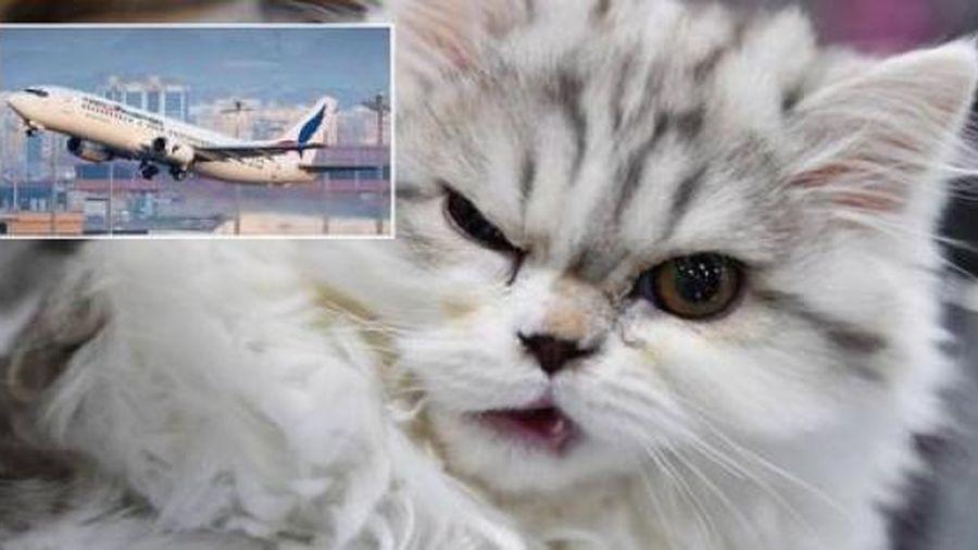 Phi công bất ngờ bị mèo tấn công ngay trong buồng lái, máy bay phải hạ cánh khẩn cấp