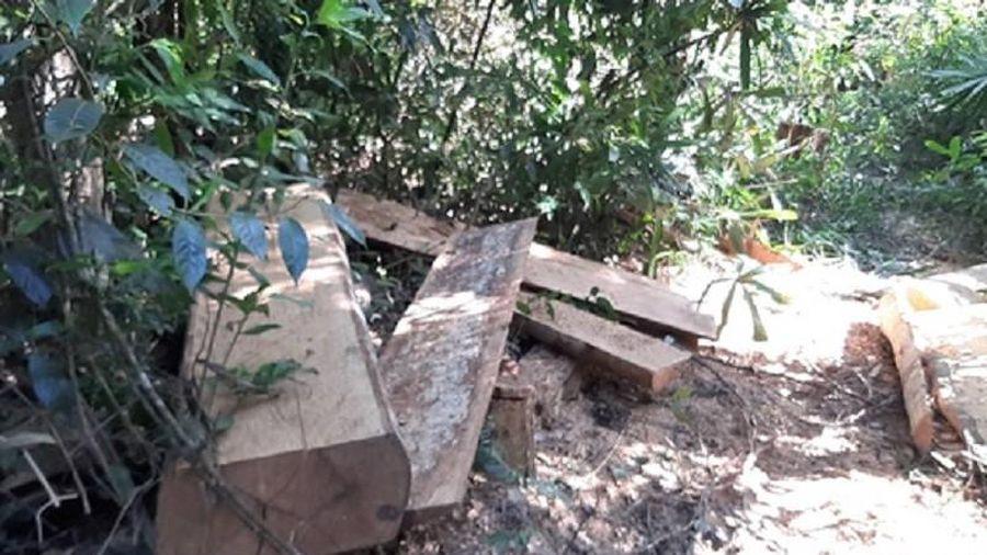 Khởi tố vụ đoàn xe độ chế vào phá rừng ở Đắk Đoa