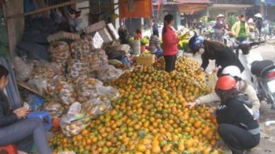 Hà Giang: Cam sành được mùa, mất giá và tiêu thụ chậm