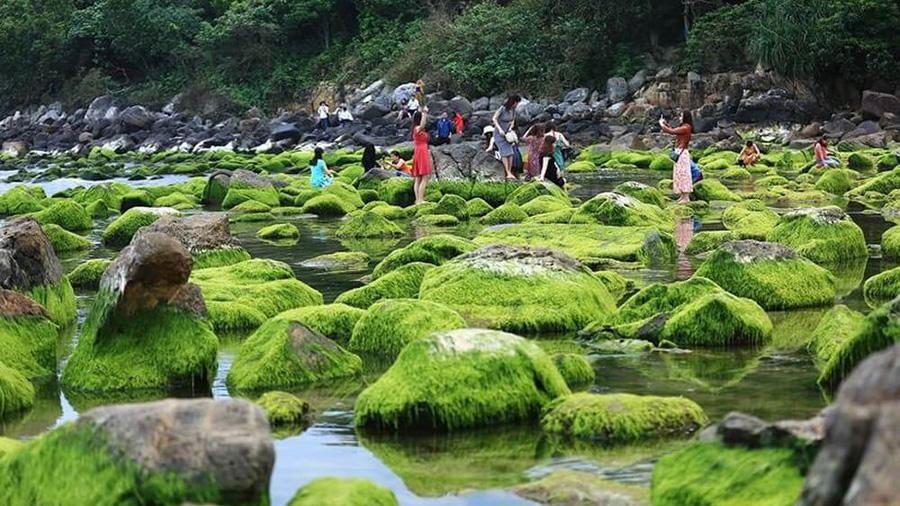 Thêm một mùa rêu biển