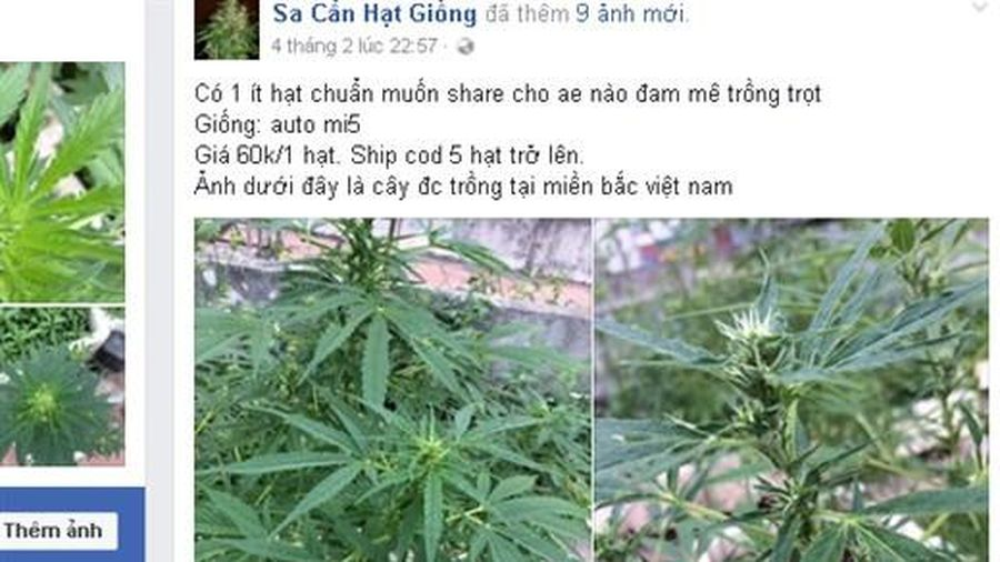Rao bán công khai thuốc phiện