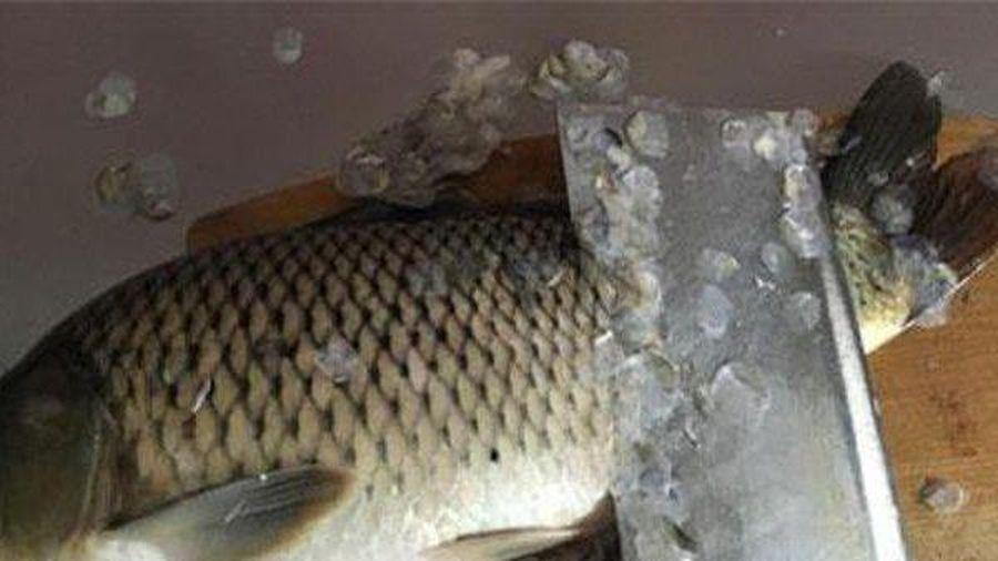 5 bộ phận cực tanh ở cá khi chế biến cần loại bỏ ngay