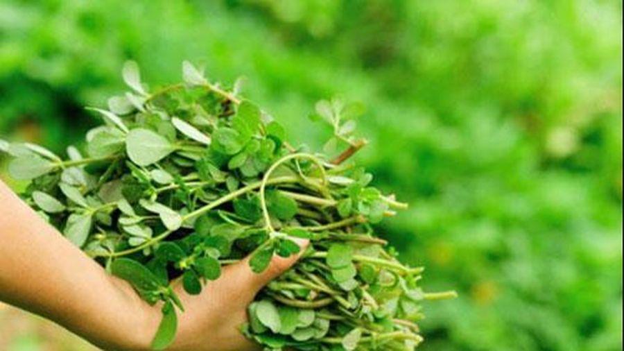4 thực phẩm được ví như nguồn 'insulin tự nhiên', Việt Nam rất nhiều và rẻ