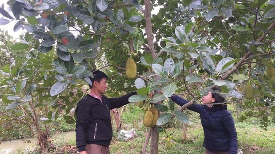 Xã Cẩm Tân phát triển nông nghiệp theo hướng hàng hóa