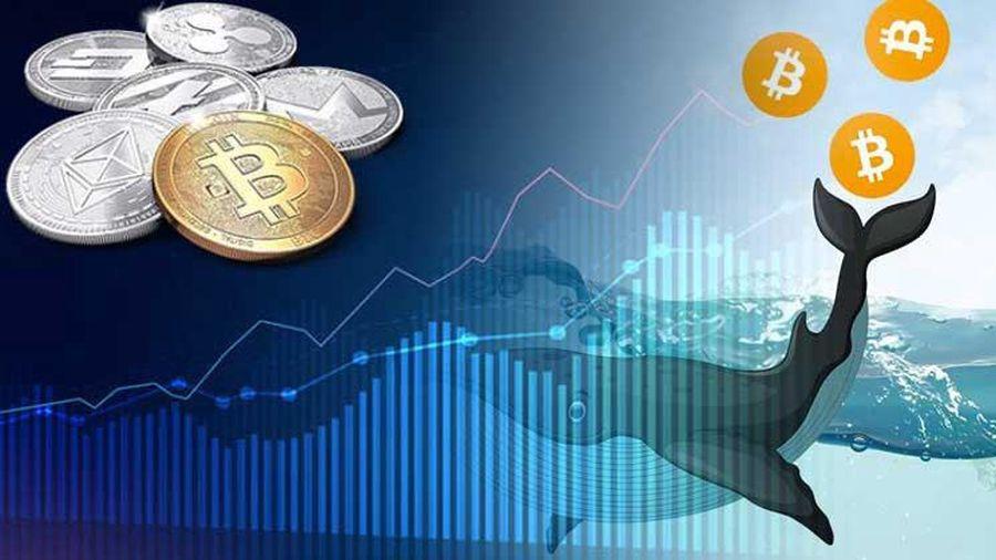Các nhà đầu tư 'cá mập' Bitcoin có khả năng thao túng thị trường thế nào?