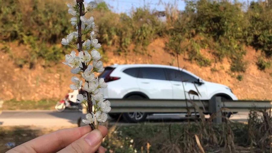 Người dùng đánh giá xe Honda CR-V 2020: Gói trang bị an toàn Honda Sensing gây ấn tượng mạnh