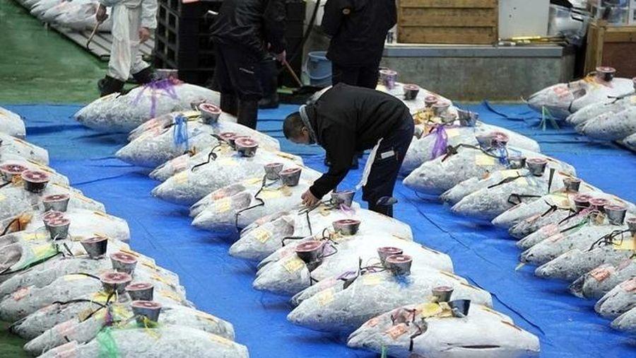 Nghệ thuật biến mọi thứ đắt như vàng ở Nhật: Cá ngừ 41 tỷ, quả dưa bằng giá ô tô