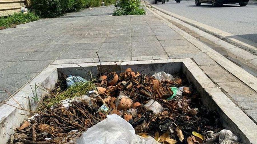 Không để hố trồng cây thành hố rác