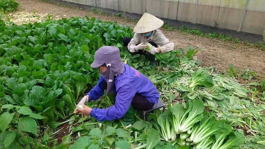 Bếp ăn tập thể hoạt động trở lại, giá rau xanh không tăng đột biến
