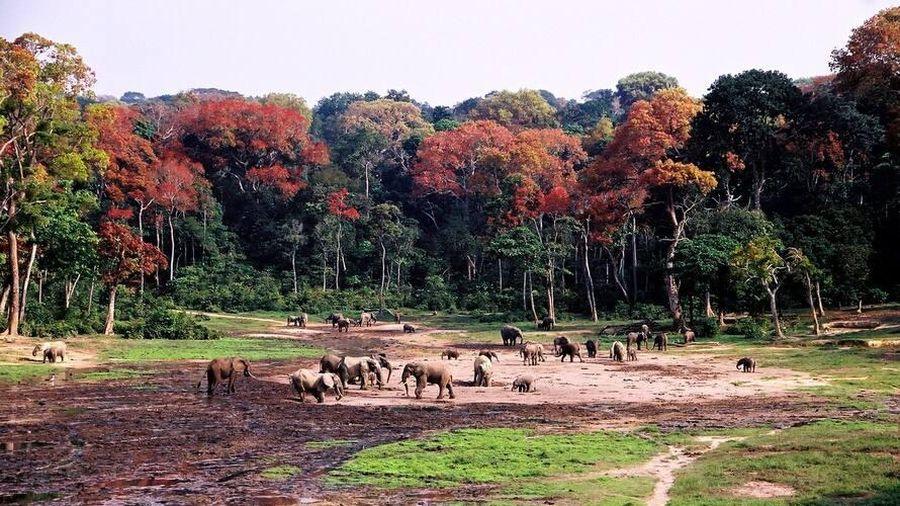 Ngày Động, thực vật hoang dã thế giới năm 2021: Bảo vệ rừng và sinh kế