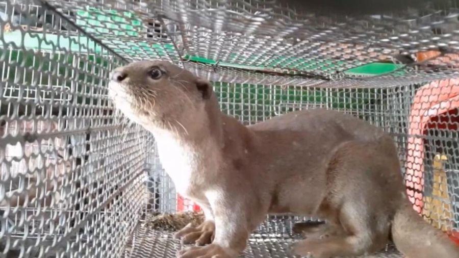 Bảo vệ các loài động vật hoang dã vì 'ngôi nhà chung' đa dạng sinh học